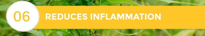 06-10-Chiens-Chanvre-CBD-Hem-Herbals-France-Jean-Marc-Fraiche-HB-Naturals