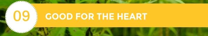 09-10-Chiens-Chanvre-CBD-Hemp-Herbals-France-Jean-Marc-Fraiche-HB-Naturals