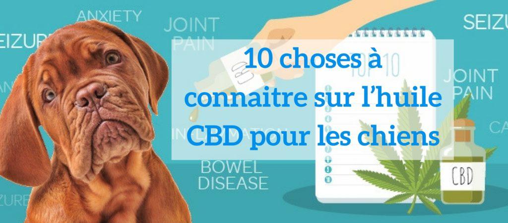 Chiens-Hemp-Herbals-CBD-Jean-Marc-Fraiche-HB-Naturals