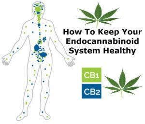 ENDOCANNABINOID-CBD-Hemp-Herbals-HB-Naturals-Jean-Marc-Fraiche