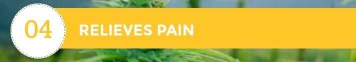 04-10-Chiens-Chanvre-CBD-Hem-Herbals-France-Jean-Marc-Fraiche-HB-Naturals