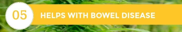 05-10-Chiens-Chanvre-CBD-Hem-Herbals-France-Jean-Marc-Fraiche-HB-Naturals