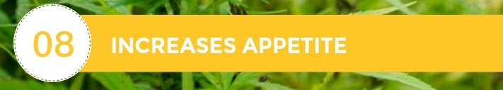 08-10-Chiens-Chanvre-CBD-HemWorx-France-Jean-Marc-Fraiche-MyDailyChoice