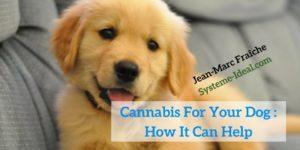 Cannabis-For-Your-Dog-How-It-Can-Help-Jean-Marc-Fraiche-VousEtesUnique.com