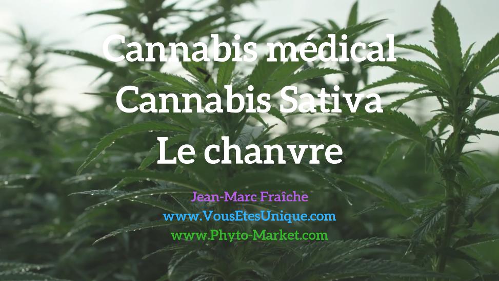 Cannabis-médical-Cannabis-Sativa-chanvre-Jean-Marc-Fraiche-VousEtesUnique