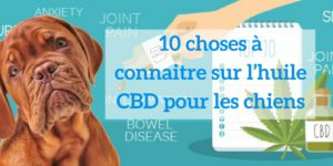 Chiens-HempWorx-CBD-Jean-Marc-Fraiche-MyDailyCHoice-768