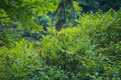 Extracyan-plantes-Extra-Life-Vision-Jean-Marc-Fraiche-VousEtesUnique.com
