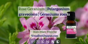 Rose-Geranium-Pelargonium-graveolens-Huile-Essentielle-HB-Naturals-Jean-Marc-Fraiche-VousEtesUnique