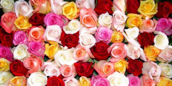 Rose-Passion-un-elixir-pour-la-romance-Huiles-Essentielles-Jean-Marc-Fraiche-VousEtesUnique.com
