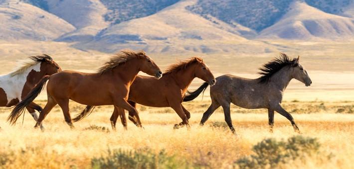 chevaux-cbd-chevaux-HB-Naturals-Jean-Marc-Fraiche-VousEtesUnique.com