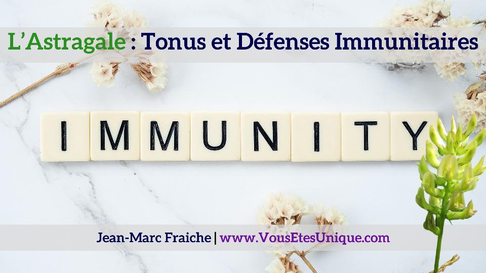 l-astragale-tonus-et-defenses-immunitaires-Jean-Marc-Fraiche-VousEtesUnique.com