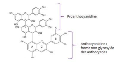 molecule-extracyan-Jean-Marc-Fraiche-VousEtesUnique.com