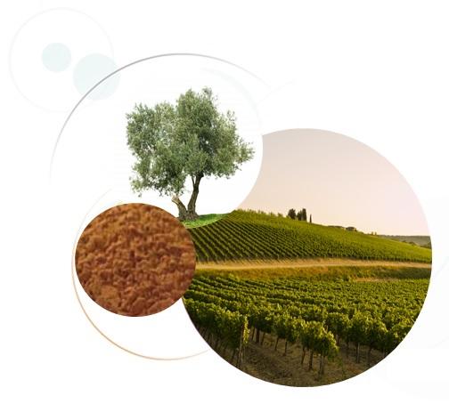 oleogrape-seed-Jean-Marc-Fraiche-VousEtesUnique.com