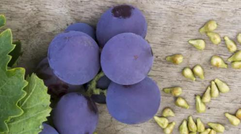 oleogrape-seed-pepin-de-raisin-Jean-Marc-Fraiche-VousEtesUnique.com