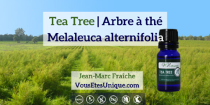 tea-tree-Melaleuca-alternifolia-Arbre-a-the-Huile-Essentielle-HB-Naturals-Jean-Marc-Fraiche-VousEtesUnique